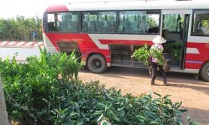 Cây Xanh Gia Nguyễn, Cây Dừa Xiêm Lùn, Cây Bưởi Da Xanh, Cây Chanh Giấy, Cây Cóc Thái