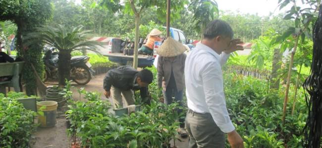 Cây giống ăn trái, Cây bưởi da xanh, Cây dừa xiêm lùn, Vườn ươm Gia Nguyễn, Vườn cây ăn trái